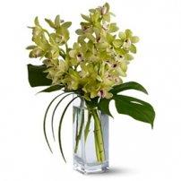 Orquídeas Cymbidium, Ecuador