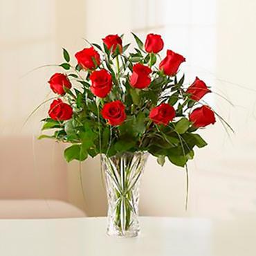 Amazing Roses - BABAHOYO